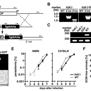 (PDF) Inhibitor of Cysteine Proteases Is Critical for