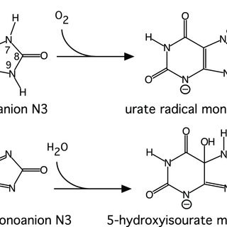 The oxidation of the monoanion N3 of uric acid by