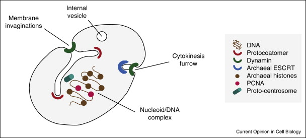 A number of features associated with prokaryotic cells