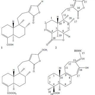 (PDF) Otostegia persica (Lamiaceae): A review on its