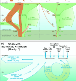 schematic diagrams of the nitrogen cycle in the strait of georgia sog showing budgets [ 850 x 1368 Pixel ]