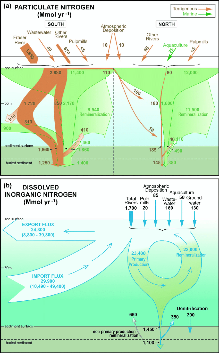 medium resolution of schematic diagrams of the nitrogen cycle in the strait of georgia sog showing budgets