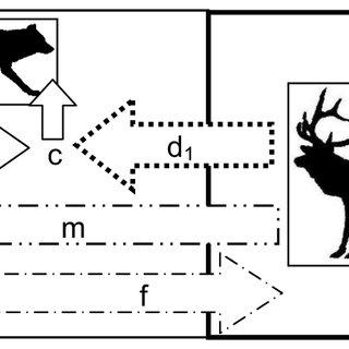 (PDF) Consequences of a Refuge for the Predator-Prey
