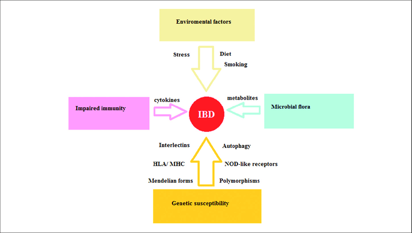 Diagram Of Crohn Disease Factors Implicated In The Pathophysiology Of Inflammatory