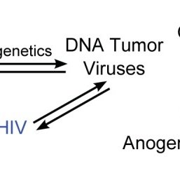 Epigenetic modifications to viral promoters can promote