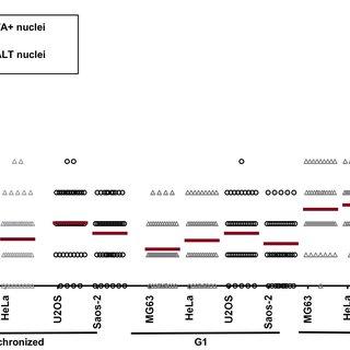 U2OS cells were synchronized by double thymidine block in