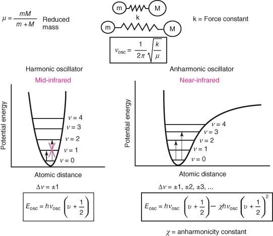 Model of the harmonic and anharmonic oscillators