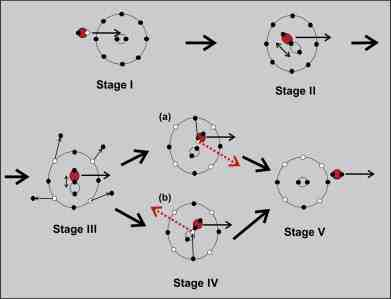 Schematic illustration of the proposed five stages of the