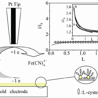 (PDF) Electrochemical investigation on the film of L