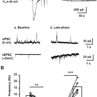 Characterization of paired pulse ratio (PPR) of evoked