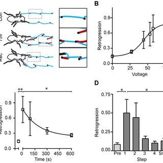 (PDF) The Effect of Stress on Motor Function in Drosophila