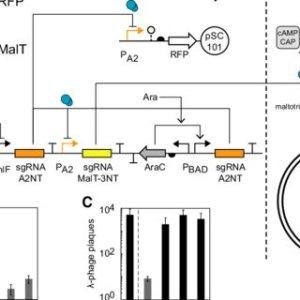 (PDF) Multiinput CRISPRCas geic circuits that
