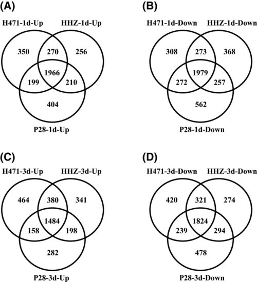 small resolution of venn diagram of differentially expressed genes degs in h471 hhz and p28