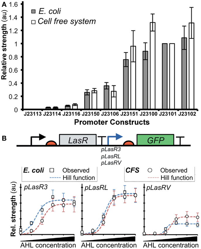 Comparison of promoter strengths in vivo and in vitro. (A