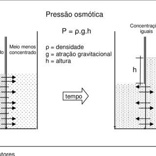 Metabolism-dependent biosorption of heavy metal ions