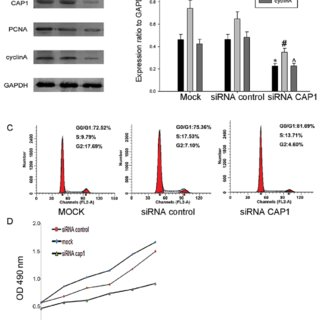 Immunohistochemical analysis of cyclase-associated protein