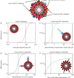 schematic of the four types of immunity in the model a an infected red blood cell is shown schematically with illustrative surface antigens  [ 850 x 948 Pixel ]