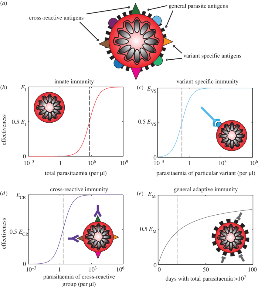 medium resolution of schematic of the four types of immunity in the model a an infected red blood cell is shown schematically with illustrative surface antigens