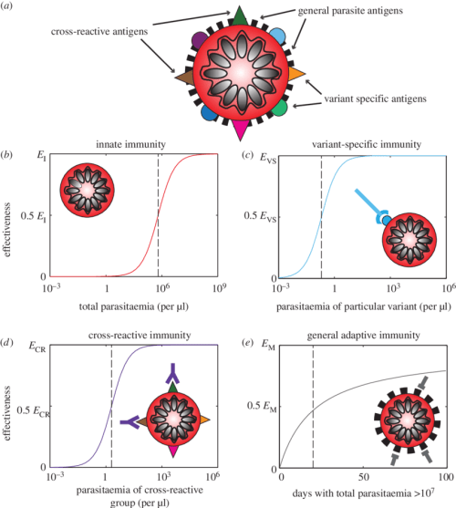 small resolution of schematic of the four types of immunity in the model a an infected red blood cell is shown schematically with illustrative surface antigens