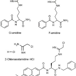 PAD-mediated histone tail citrullination leads to