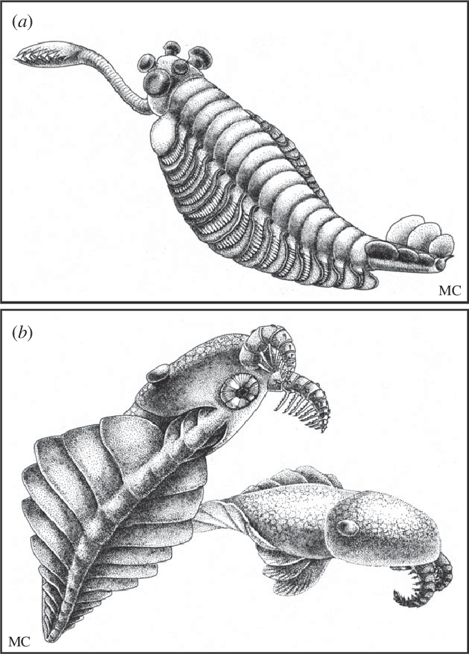 Illustrations of (a) Opabinia and (b) Anomalocaris from