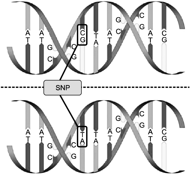 Description of single nucleotide polymorphisms (SNPs). As