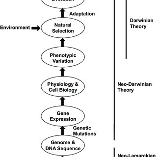 -Schematic of the unified theory of evolution. No