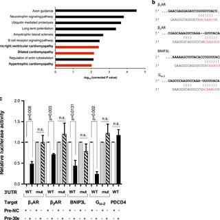 (PDF) Myocardial MiR-30 downregulation triggered by