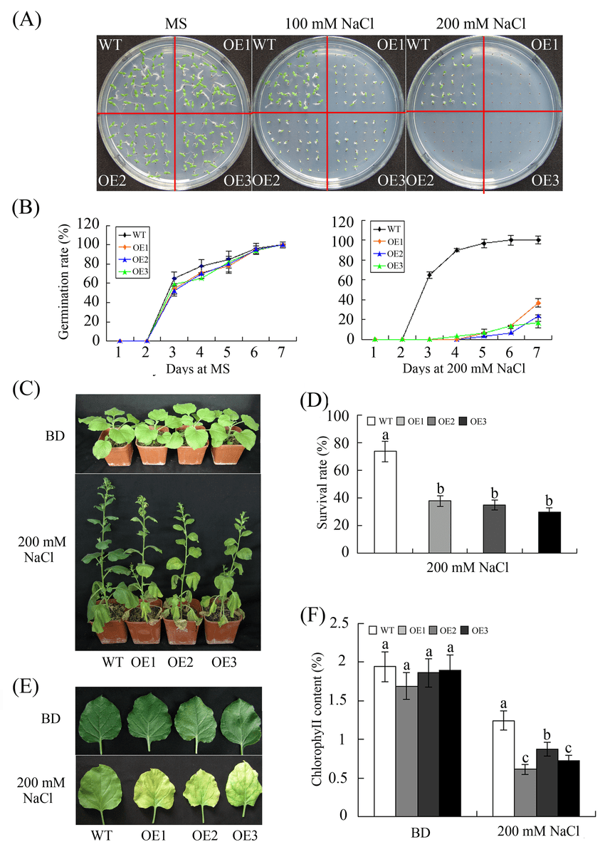 hight resolution of reduced salt tolerance in transgenic plants overexpressing ghwrky68 a seed germination on 1