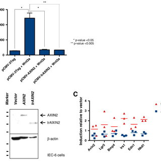 AXIN2- and trAXIN2-mediated inhibition of Wnt/β-catenin