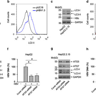 (PDF) Epigallocatechin-3-gallate opposes HBV-induced
