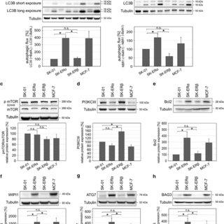 Estrogen receptor regulates non-canonical autophagy that