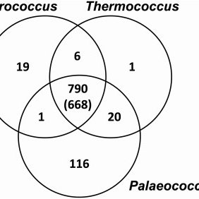 Phylogenetic tree of the 21 sequenced Thermococcales. The
