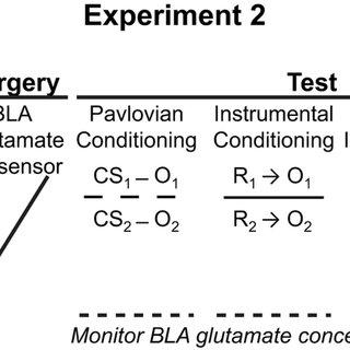Basolateral amygdala rapid glutamate release encodes an