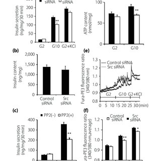 (PDF) Src regulates insulin secretion and glucose