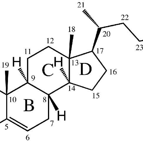 (PDF) Absorption-Enhancing Effects of Bile Salts