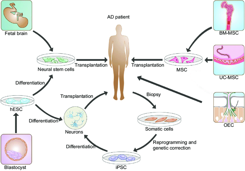 Stem cell sources for AD therapy, See #1, Notes: There are mainly ...