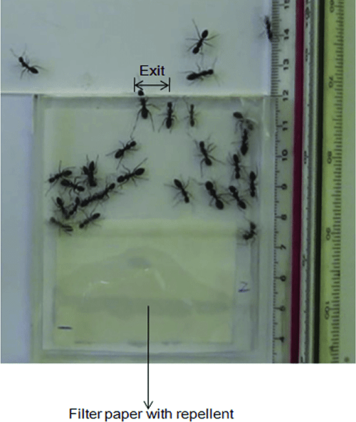 small resolution of video recording of ants evacuating from a single exit room the exit width is