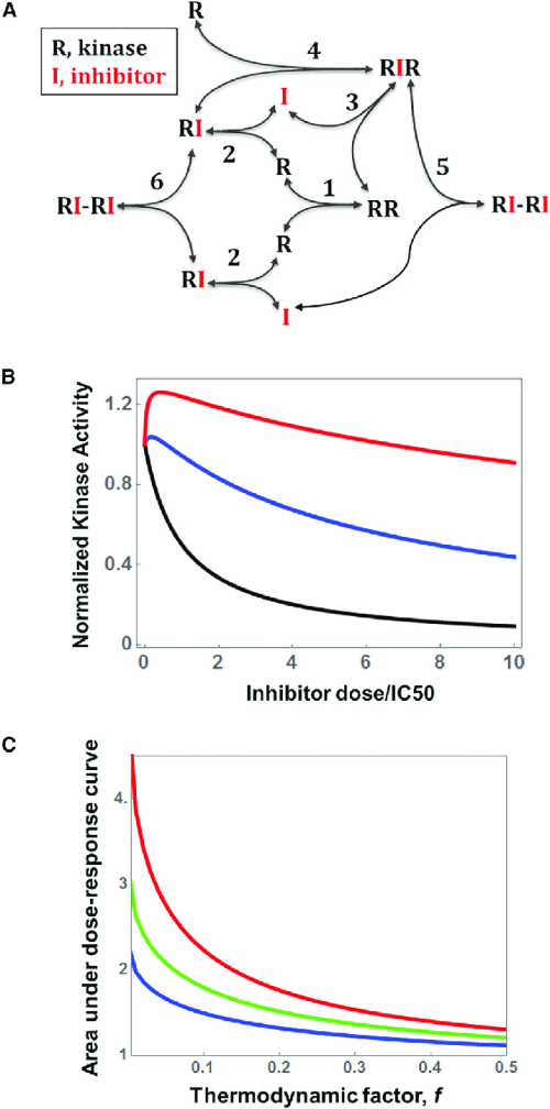 small resolution of a core model of kinase dimerization and inhibitor binding a kinetic diagram is shown