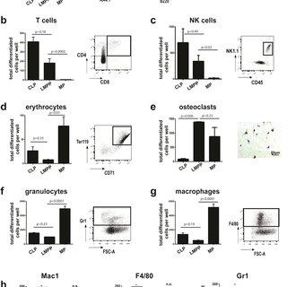 (PDF) Chemokine polyreactivity of IL7Rα(+)CSF-1R(+) lympho