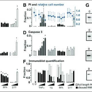 Cell death measurements using conventional image-based