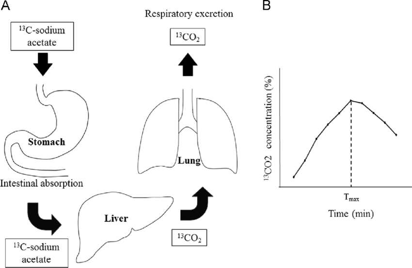 Schematic process of metabolism and respiratory excretion