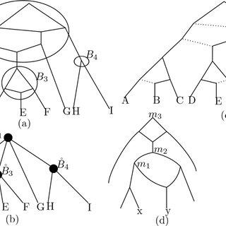 Gene trees. Left: Example of an evolutionary scenario