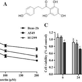 The role of Ph in Transwell migration of A549 cells. (A
