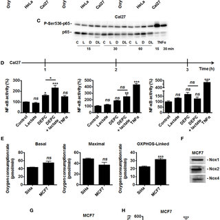   Hydrogen peroxide activates NF-κB in oxidative tumor