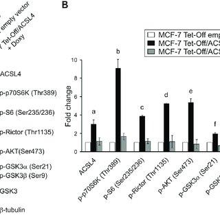 (PDF) Acyl-CoA synthetase-4, a new regulator of mTOR and a