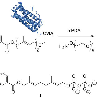(PDF) Site-Specific PEGylation of Therapeutic Proteins