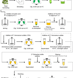 schematic diagram of downstream processing of recombinant protein ga733 fck from plant leaf biomass [ 850 x 1187 Pixel ]