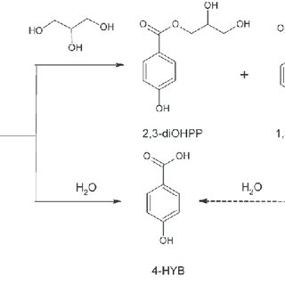 (PDF) Hydrolysis and transesterification of parabens in an