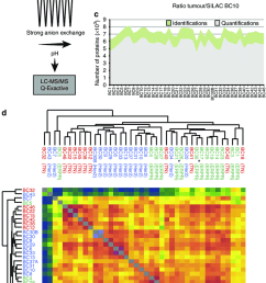 super silac based quantitative proteomics of breast cancer clinical download scientific diagram [ 850 x 1488 Pixel ]